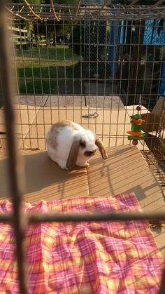 My bunny the day we brought him home <3 ❤