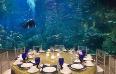Seattle Aquarium, Seattle, Washington (WA) - Meeting Place, Wedding Venue