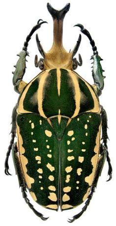 #Beetles