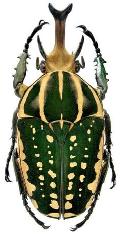 A new key to the suprageneric taxa in the beetle family ...