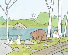 An illustration of a beaver surrounded by birch trees and chewed stumps. A lake and beaver lodge in the background. Originally drawn with ink and watercolor. A fun and unique North America nature print for the nursery or kids room! - Fine art print - Printed on heavyweight etching rag