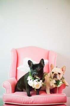 french bulldogs with wings