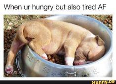 #meme, #nationalpuppyday, #dog, #puppy, #sleep