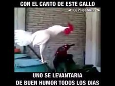 Funny Animal Pictures, Funny Animals, Good Morning Funny, Spanish Humor, Memories Quotes, Morning Images, Morning Gif, Morning Coffee, California Love