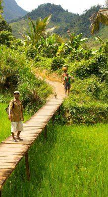 FRODIG: Marojejy National Park er virkelig verdt et besøk på øya Nosy Be utenfor Madagaskar.