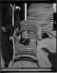 Unkown sailors with black cat, Miss Vixen, mascot of the U.S.S. Vixen, ca. 1900.