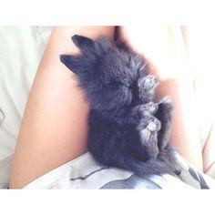baby fuzzy bunny