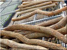 Akác ágfa Zulu, Wood, Crafts, Manualidades, Woodwind Instrument, Timber Wood, Zulu Language, Trees, Handmade Crafts
