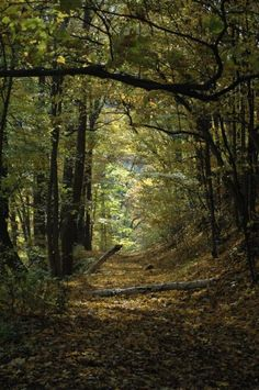 Is this not where Frodo tells Merry and Pippin to get off the road? Looks just like it. Forest Path, Woodland Forest, Tree Forest, Vie Simple, Old Trees, Walk In The Woods, Tree Leaves, Gods Creation, Nature Pictures