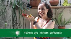 4 Plantas que Atraem Borboletas/4 Plants that Attract Butterflies - A Me...