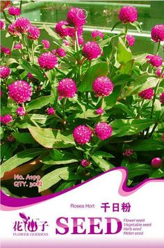 Flower seeds seed powder red seeds bonsai 30 PCS / Bag  Original Packaging Home Garden Bonsai Tree Decor Pots Planters