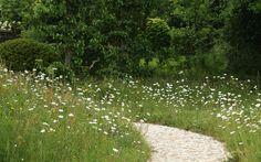 Arne Maynard Garden Design: A century farmhouse in Devon Garden Borders, Garden Paths, Garden Landscaping, Wild Flower Meadow, Wild Flowers, Champs, Prairie Meadows, Meadow Garden, Classic Garden