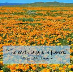 Flower quote via My Renewed Mind on Facebook