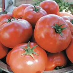 1000 Images About Blight Resistant Tomatoes On Pinterest 400 x 300