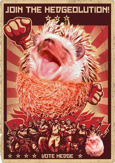 Let's Make Pro-Hedgehog Propaganda Together