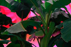 Ознакомьтесь с этим проектом @Behance: «Palms on acid» https://www.behance.net/gallery/46324043/Palms-on-acid