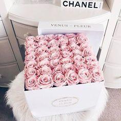 Venus Et Fleur flower flowers floral roses flower pictures light pink roses