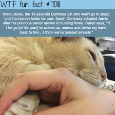Jamie the cat - WTF fun facts