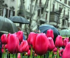 """MAY 1, 2014 The Benefits of Rainy Days by Rachel at Porridge blog """"… millions long for immortality who don't know what to do with themselves on a rainy Sunday afternoon."""" - Susan Hertz stop by and say hi -  www.justwritemommy.com"""