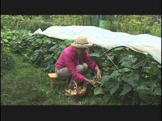 Выращивание рассады огурцов - YouTube