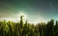 Fond d'écran hd : nature