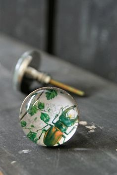 beetle knobs. can you tell I've got a new favourite online store?