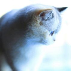 Reposting @aguifornia: I Love Cat's ❤ . . . . . . . . . . . . . . . . . . . . . . . . . . . . . . #cat #cats #gato #gatos #felinos #tumblr #pet #pets #followme #animais #cute #tbt #nature #s4s #follow #fofo #likesforlikes #likes4likes #me #picoftheday #likeforlike #like4like #follow4follow #followforfollow #follow #instagram #followback #instagood #instadaily
