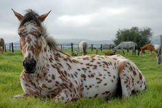 chillin horse #chilled horse #chilled