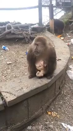 Thanks for the food human! but don't you dare touch my baby. -- Thanks for the food human! Funny Animal Memes, Cute Funny Animals, Cute Baby Animals, Animals And Pets, Wild Animals, Funny Babies, Funny Dogs, Cute Babies, Mundo Animal