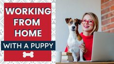 Working From Home with Dogs - Puppy Edition - 7 Tips to Stay Productive While Keeping a Puppy Calm and Quiet // Working from home with a puppy can be a little challenging if you don't know these 7 tips. Learn how to be productive while working from home with puppy training. Puppy Obedience Training, Puppy Training Tips, Crate Training, Potty Training, Dog Barking, New Puppy, Dogs And Puppies, Learning, Calm
