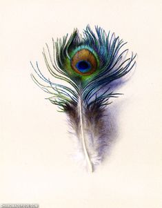Peacock Feather Tattoo, Feather Drawing, Peacock Art, Feather Painting, Feather Art, Peacock Feathers Drawing, Feather Tattoos, Watercolor Peacock, Watercolor Art