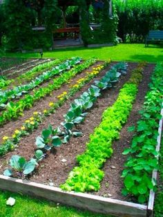 Potager traditionnel