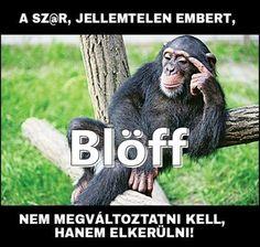 Stupid Things, Animals, Stupid Stuff, Animales, Animaux, Animal, Animais