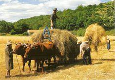 L'Auvergne à la campagne - c'était ça