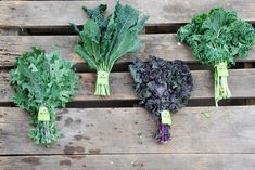 The superfood kale on the side of your plate is one of the most nutrition packed vegetables you can eat! Kale is not just a garnish, it is an edible superfood! Types Of Kale, Le Chou Kale, Dinosaur Kale, Ornamental Kale, How To Cook Kale, Kale Recipes, Friends With Benefits, Kale Chips, Organic Fertilizer