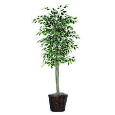 cool  714 Leaves that vary in shades Designed and assembled in the USA Maintenance Free   https://www.silkyflowerstore.com/product/vickerman-6-feet-artificial-variegated-ficus-economy-tree-in-decorative-container/