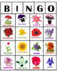 Game - Flower Bingo | free printable Bingo cards for seniors Free Printable Bingo Cards, Free Printables, Daffodils, Pansies, Garden Games, Crafts For Seniors, Poinsettia, Coloring Pages, Lily