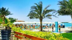 Beachplease! #meeting with a #view Wish all our meetings were by a #beach ;) @yasbeach @simplyabudhabi @inabudhabi #abudhabi #yasisland #yasbeach #weloveauh #weloveuae #daycation spot!