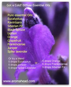 Diffuse Essential Oils for a cold. Free online Aromatherapy class from Aromahead Institute Essential Oil Safety, Essential Oils For Colds, Essential Oil Diffuser Blends, Essential Oil Uses, Young Living Essential Oils, Doterra Diffuser, Oils For A Cold, Ravintsara, Aromatherapy Oils