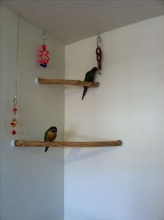 It's conure corner perch! Bird-proofing your house means having safe perches available for your parrot to fly towards. Homemade Bird Toys, Diy Bird Toys, Parrot Perch, Bird Perch, Best Pet Birds, Bird Stand, Parrot Stand, African Grey Parrot, Bird Aviary
