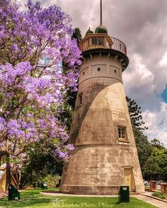 Brisbane City, Jacaranda tree (@Brisbane_City)   Twitter Brisbane Cbd, My Dream, Lighthouse, Australia, Pictures, Photos, City, Building, Places