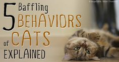 Cats are wildly popular pets -- they may have some bizarre mannerisms, but don't misunderstand them. http://healthypets.mercola.com/sites/healthypets/archive/2014/09/05/5-mysterious-cat-behaviors.aspx