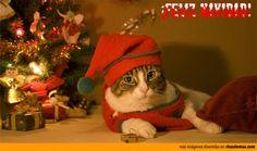 Felicitaciones navideñas: Gato Papa Noel.