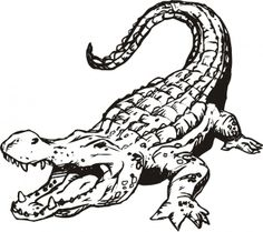 Printable Alligator Coloring Pages Image