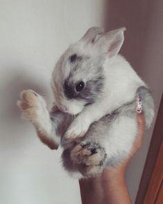Our cutie Bunny