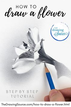 Learn how to draw a flower using graphite pencils in this step by step drawing tutorial! | flower drawing tutorials | flower drawing tutorials step by step | draw realistic flowers | draw realistic flowers step by step | how to draw flowers realistic | how to draw realistic flowers step by step | how to draw realistic flowers pencil | draw a flower | draw a flower step by step | how to draw a flower realistic | flower drawing tutorials pencil | realistic flower drawing | drawing a flower Drawing Skills, Drawing Lessons, Drawing Techniques, Drawing Tips, Art Lessons, Drawing Drawing, Flower Drawing Tutorial Step By Step, Flower Drawing Tutorials, Flower Step By Step