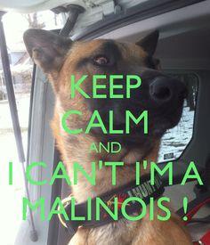 Keep Calm ... I Can't I'm a Malinois!!