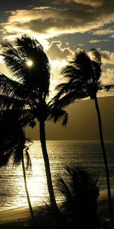 Maui Sunset ♥ I could almost feel the sea breeze... look at the palm dancing!