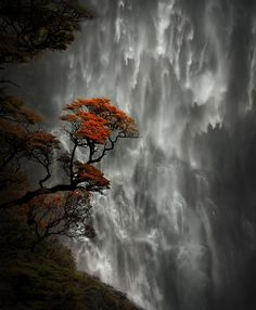 Devil's Punchbowl Falls, Arthur's Pass National Park, with flowering Southern rātā