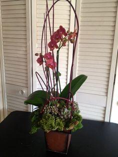send long lasting plant's & succulent's